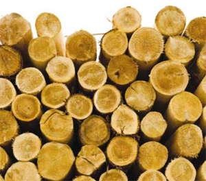 A biomass cogeneration plant worth 35 million euro is being constructed by Romanian Greenprav